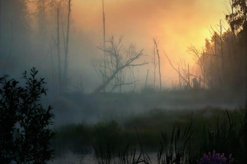 Swamp by Aleks Dush